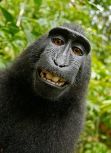 monkey-selfie_custom-7117031c832fc3607ee5b26b9d5b03d10a1deaca-s500-c85